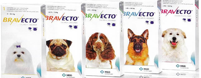 Primary image for Bravecto Coupon webpage